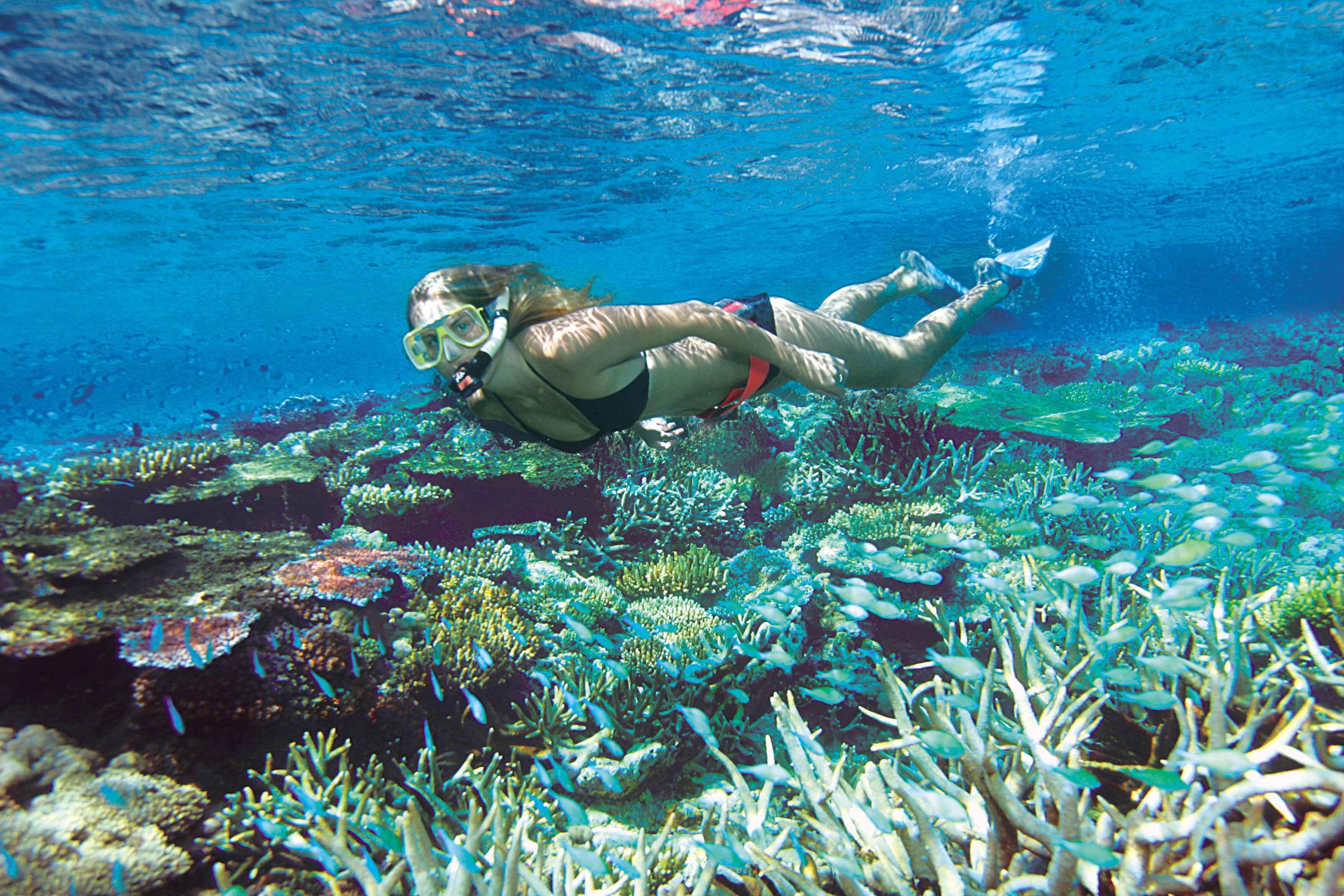 Snorkelling Port DOuglas
