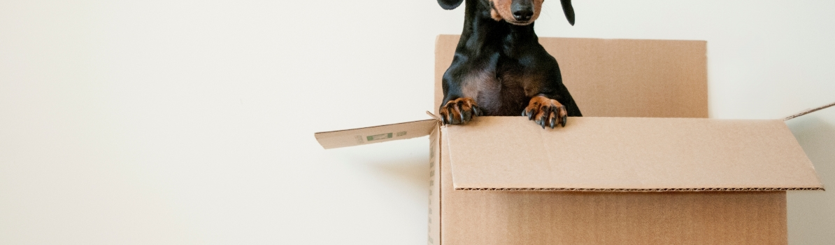 Top Tips for an Interstate Move